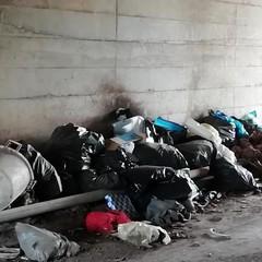 Animali morti in sacchi di plastica: interviene la Polizia Locale