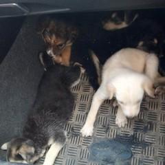 11 cuccioli di cane nel pozzo, salvati da morte certa. Gli eroi sono di Molfetta