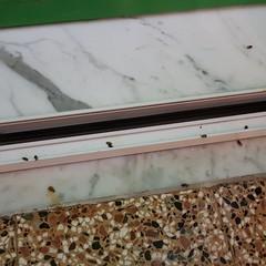 Invasione di insetti a Piazza Roma