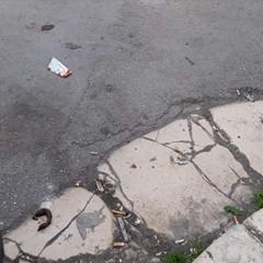 Escrementi di cane in strada