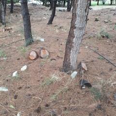 Verde pubblico, il WWF accusa: «Alberi abbattuti senza criterio»