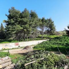 Taglio di alberi al parco di Mezzogiorno, interviene il WWF: «È una strage»