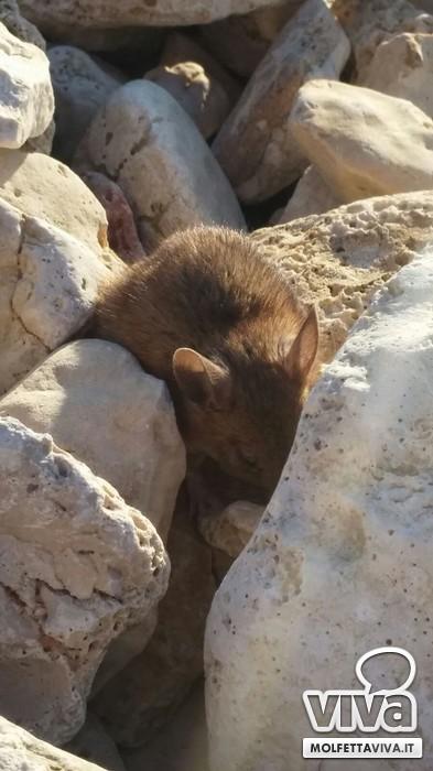 Topo in spiaggia