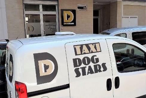 DogStars taxi dog