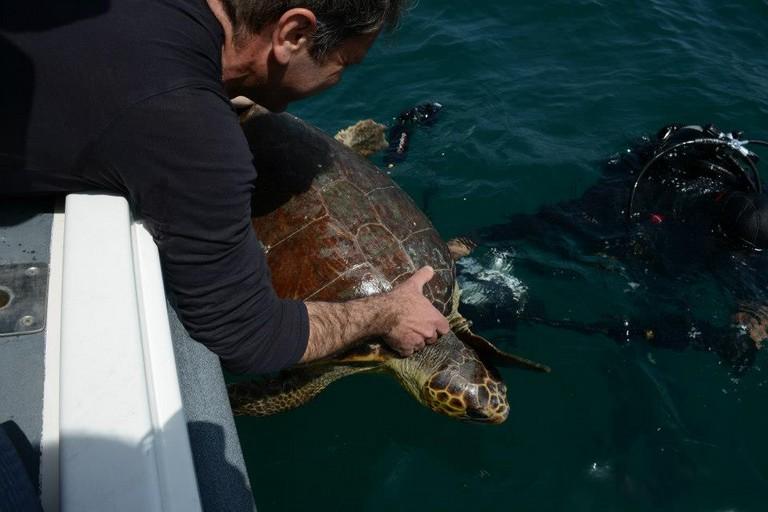 La liberazione di una tartaruga
