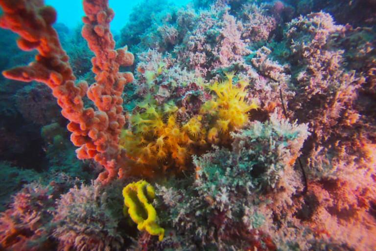 Una piccola barriera corallina da custodire tra Giovinazzo e Molfetta (FOTO)