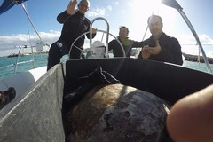 100 euro ai pescatori che salvano le tartarughe, i centri di recupero scrivono al Ministero