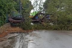 Coldiretti: «Clima tropicale, notevoli danni e disagi»