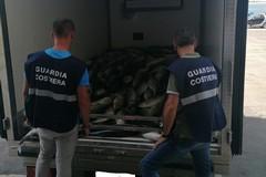 Sequestro record di tonnettoalletterato: oltre 5 tonnellate