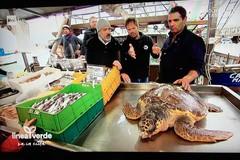 Impigliata nella rete, la tartaruga soccorsa finisce su Linea Verde