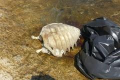 Tartaruga morta recuperata dal centro di Molfetta