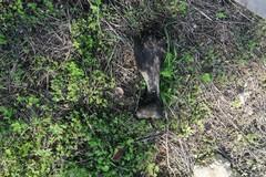 Ossa di animali in un campo: forse macellazione abusiva
