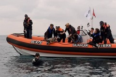 Tartarughe marine, Edoardo Stoppa è tornato a Molfetta