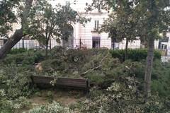 Potature sotto accusa nella Villa Comunale: «Mettono a rischio i nidi»