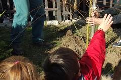 Grande festa per la giornata internazionale dei diritti dell'infanzia e la giornata dell'albero