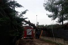 Vento forte, interventi in zona stazione e Asi, via Berlinguer e provinciale per Terlizzi