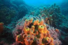 """Febbre da """"corallo"""" a Molfetta, tra biodiversità e il possibile ritorno turistico"""