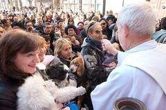 """""""Benedizione degli animali mercoledì sul piazzale della Parrocchia Sant'Achille"""