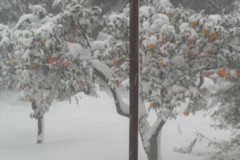 Emergenza neve: disponibili i moduli per i sopralluoghi alle aziende agricole