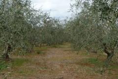 CIA Agricoltori: «Nuovo impulso allo sviluppo delle aziende agrituristiche»
