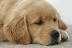 Per  San Valentino regala l'adozione a distanza di un cucciolo