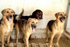 Morto un altro cane sulla Complanare: dramma senza colpevoli o morte naturale?