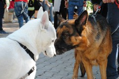 Il futuro dei cani