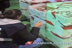 Controlli sulla filiera ittica, sequestrate 6 tonnellate di prodotti