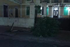Vento forte, danni tra Via Baccarini e Corso Umberto