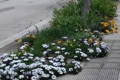 Nel quartiere Madonna della Rosa di Molfetta i residenti adottano il verde