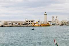 Delfino nel porto di Molfetta, si allena con gli studenti del Liceo Classico