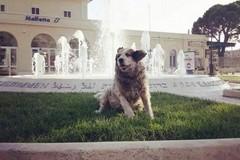 Molfetta si mobilita per Rufus, l'Enpa assicura: «Seguito ogni giorno da volontari e veterinaria»