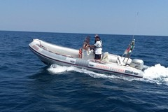 Delfino in difficoltà al largo del porto di Molfetta, salvato dalla Guardia Costiera
