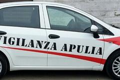 Tentano di svaligiare una villa: ladri messi in fuga dalla vigilanza Apulia