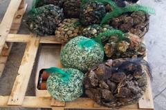 Pesce e frutti di mare non tracciati, controlli della Guardia Costiera