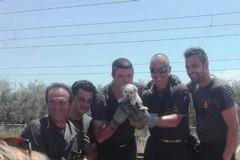 Il cucciolo Fire salvato dai Vigili del Fuoco di Molfetta. Il video che ha commosso il web