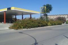 Verde pubblico trascurato: su via Giovinazzo, marciapiede inutilizzabile