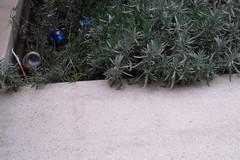 Corso Umberto, fioriere trasformate in cestini