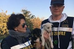 Le guardie zoofile sottraggono due cuccioli a due senza fissa dimora