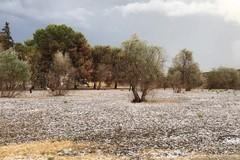 Pioggia e grandine, Coldiretti conta i danni nelle campagne di Molfetta