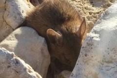 Molfetta, la città in cui i topi vanno in spiaggia - LE FOTO