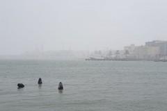 Anche oggi maltempo su Molfetta: neve mista a pioggia sulla città
