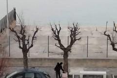 Rione Madonna dei Martiri: «Siamo la discarica a cielo aperto di Molfetta»
