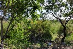 Isola ecologica di mezzogiorno a Molfetta? I dubbi di Antonello Pisani