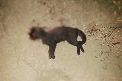 Gatti massacrati e uccisi. Un altro caso di maltrattamenti su animali a Molfetta?