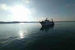 Pescherecci di nuovo in mare, torna il pesce fresco nelle case di Molfetta