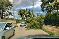 Forte vento a Molfetta, cede un albero in Via Madonna delle Rose
