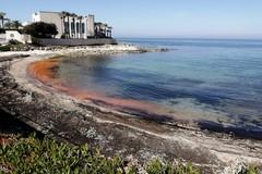 Mare rosso a Molfetta, un'alga fa cambiare il colore dell'Adriatico