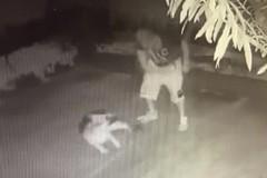 Uomo frusta un cane e il video shock diventa virale: il web s'indigna