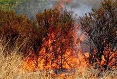 Pericolo incendi, il sindaco di Molfetta ordina rimozione di erbacce e sterpaglie
